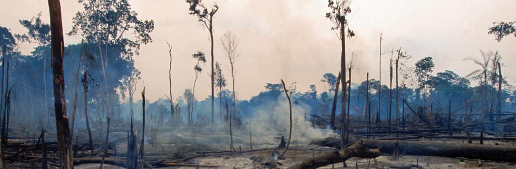 Amazon_burning_forest